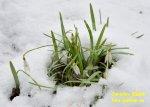 snezenky-ve-snehu